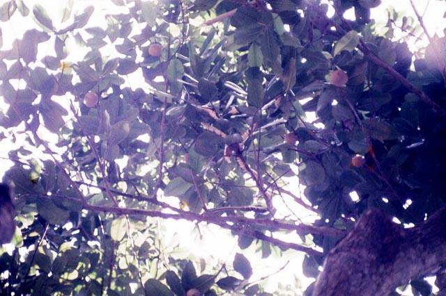 32SnakeIn Tree
