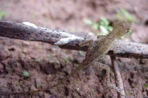 Lizard no ID 02