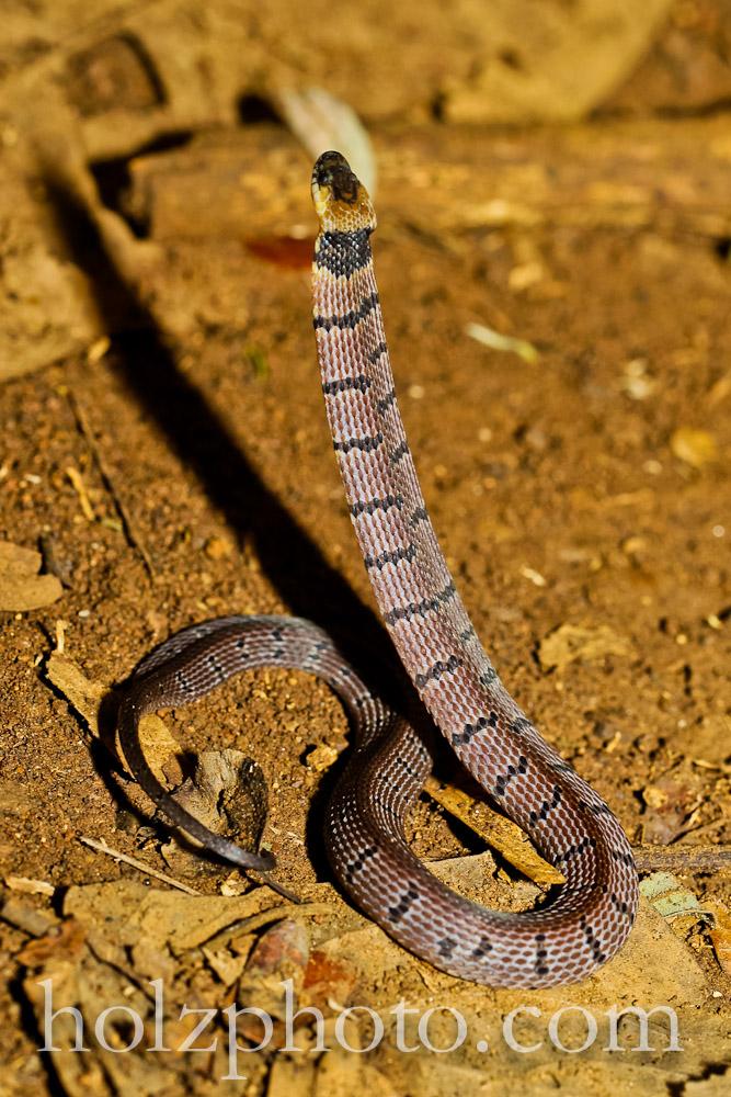 Scorpion01